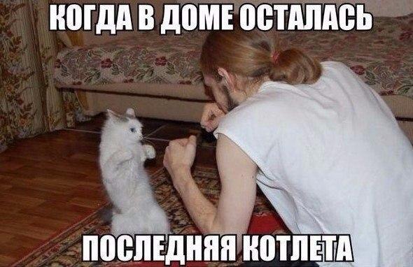 Кот Баюн, раздолбаи.рф