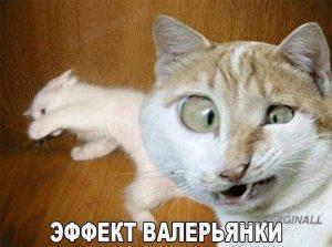 кошки после валерьянки