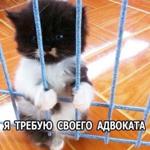 А кота то за что ?