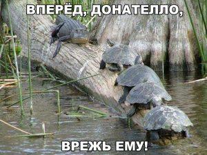Армия черепах