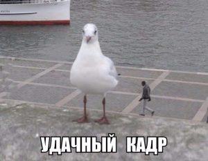 Гигантский голубь