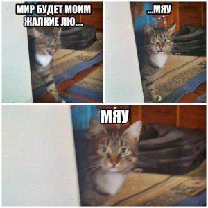 Я всего лишь кот