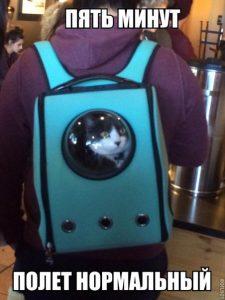 Коты и до космоса добрались