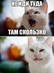 Кот предупреждал