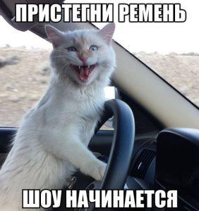 Кот водитель