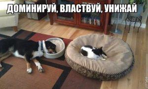 Кот захватчик