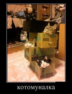 Коты и коробки