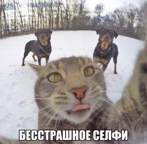 Коты тоже фотографируются