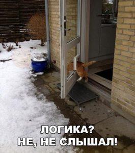 Логика кота