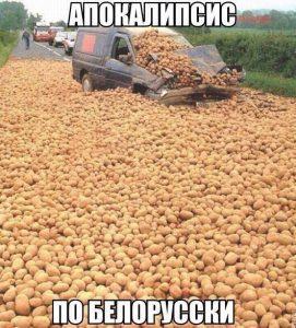 Много картошки и ешё больше картошки