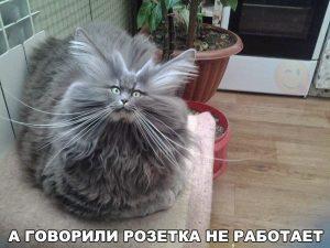 Наврали коту