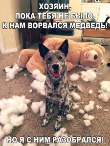 Пёс охранник