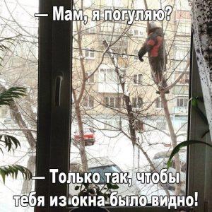Подошла к окну а там