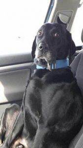 Сфотографировал собаку когда жена села за руль