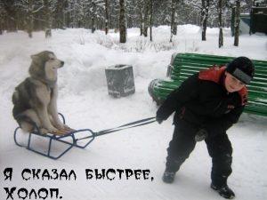 Собака царь
