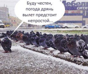 Вылет армии голубей
