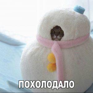 Холодно аж коты замерзают