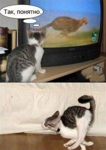 Учёба кота