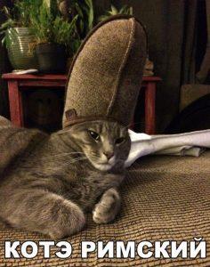 Король кошачьей армии