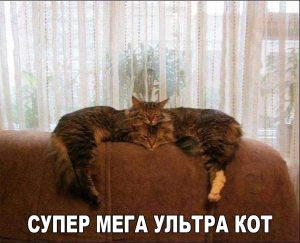 Кот Горыныч