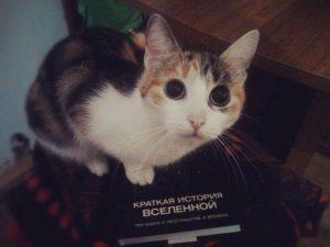 Кот который осознал всё