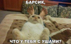 Кот мутант