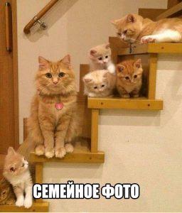 Кошачья семья в сборе