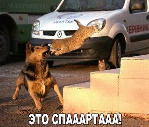 Сила кота