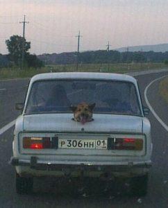 Собаку возить легче