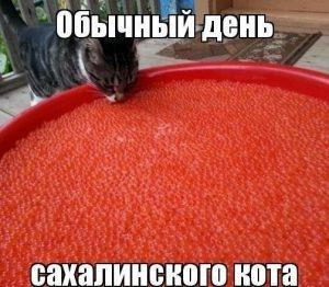 Еда есть всегда