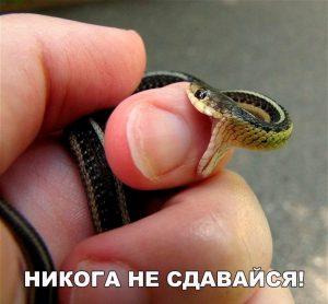 Будьте как змея