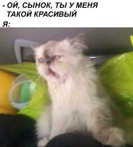 Я кот