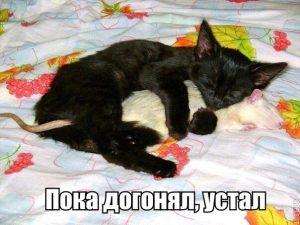 И мышь устала