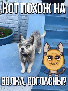 Или волк на кота