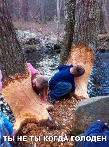 Не пробуйте есть деревья