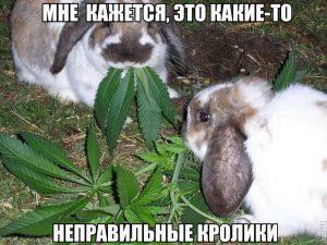 Весёлые кролики