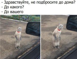 Я же твой кот