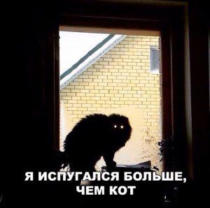 Кот троль