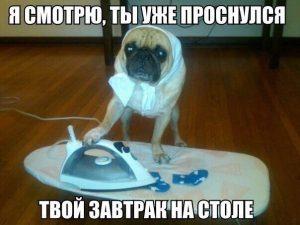 Мне нужен этот пёс