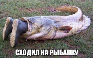 Рыбака поймали