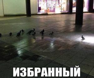 Повелитель голубей
