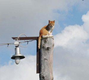 Приключения кота. Смешная история