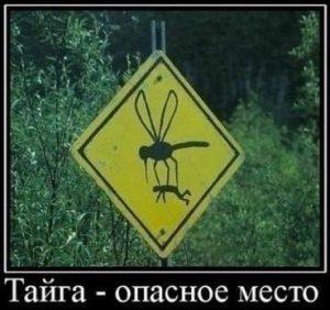 Комары чуть выросли
